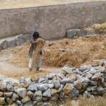 Avlonan viljan puintia