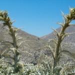Kaktukset vuoristossa